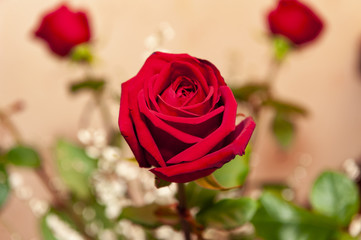 Red rose from high angle view
