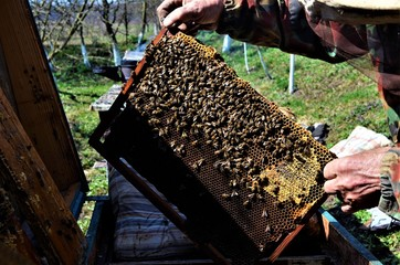 a group of beekeepers work in the apiary