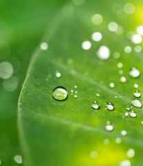 Beautiful detail of leaf with water drops, macro photo.