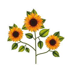 cute sunflower flower with leafs decorative