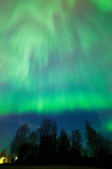 Northern lights aurora borealis tree landscape at night
