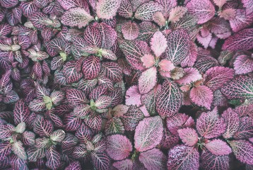 pink bed of leaves background