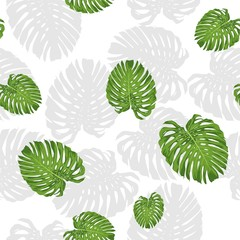 tropical monstera leaf vector seamless pattern with white background