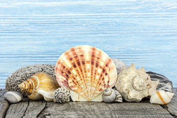 various seashells and marine pebble against blue wooden boards. summer holiday background