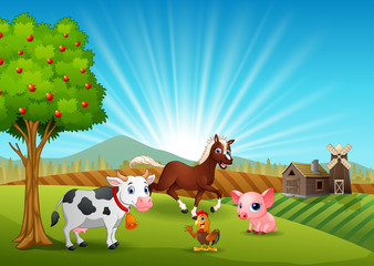 Farm animals activity in the morning