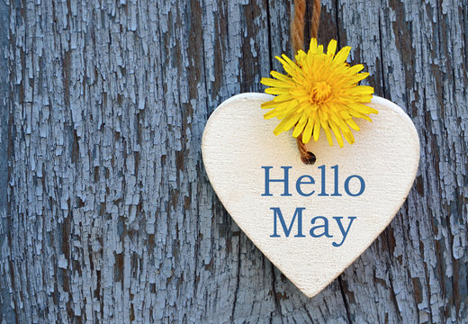 Hello May greeting card with decorative white heart and dandelion yellow flower on old blue wooden background.Springtime concept. Selective focus.