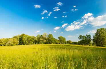 Summer meadow landscape Wall mural