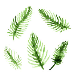 Watercolor palm tree leaves set. Green fronds collection. Vector illustration isolated on white background.