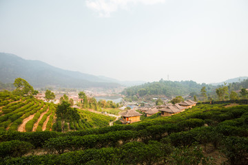 House chainese style at Lee Wine Ruk Thai Resort with Green tea farm
