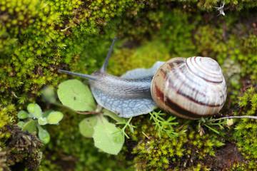 Snail on Moss