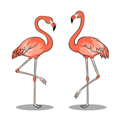 Pink flamingo bird pop art vector illustration