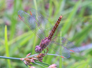 dragonfly, insect, nature, macro, animal, bug, wings, fly, green, wildlife, wing, dragon, closeup, summer, insects, damselfly, dragonflies, odonata, close-up, fauna, flying, darter