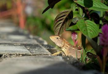 House lizard or little gecko under plant.