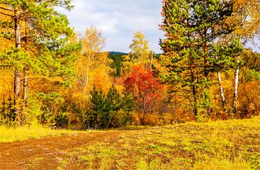 Autumn golden forest nature landscape