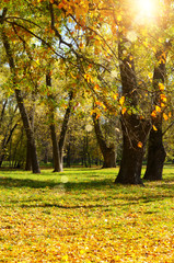 Autumn landscape background of trees and dry leaves on grass