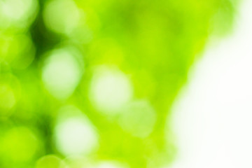 Green bokeh nature