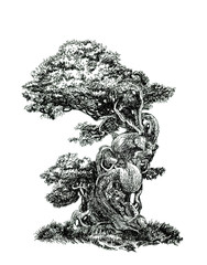 Deciduous bonsai.