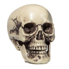 Human skull on white isolated background.