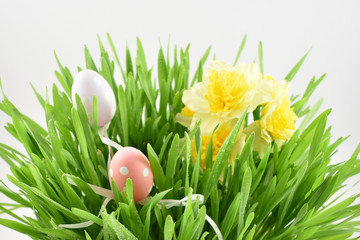Spring grass stock images. Easter decoration on a white background. Spring decoration images. Spring floral decoration. Spring background concept. Fresh green grass