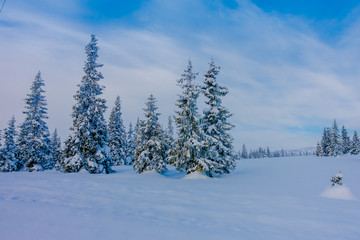 Beautiful landscape of snow in the dense forest during winter