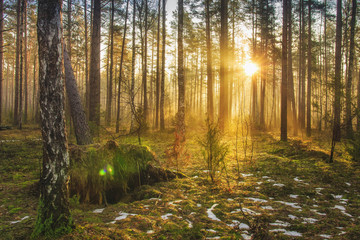 Garden Poster Forest Landscape of spring forest in backlight. Morning rays of sun in frame at dawn in picturesque forest. Natural nature. Sunbeams through trees of woodland. Spring background.