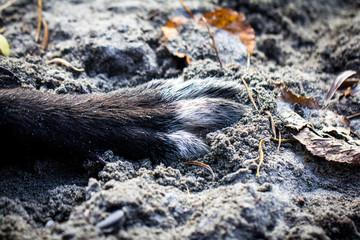 Detailaufnahme von einer Hundepfote, Pfotoe von einem Hund auf Sand auf der Erde