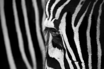 Autocollant pour porte Zebra Zebra Locked
