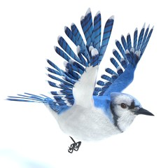 3d illustration of a Blue Jay bird