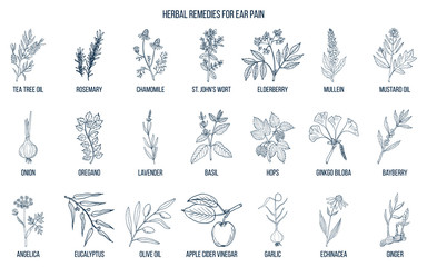 Best medicinal herbs for ear pain