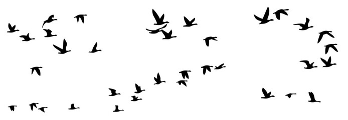 Flight of birds.