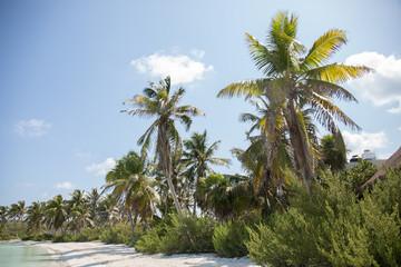 Palm tree island paradise coconut utopia blue sky vacation travel
