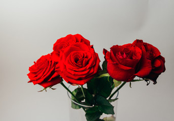 red roses on a gray background, and green leaves, stand in a transparent vase