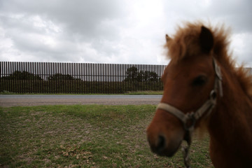 A pony grazes close to a section of border fence by the Mexico-U.S. border near Brownsville