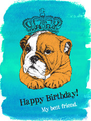 Birthday card of puppy English bulldog in crown on watercolor blue background - vector design