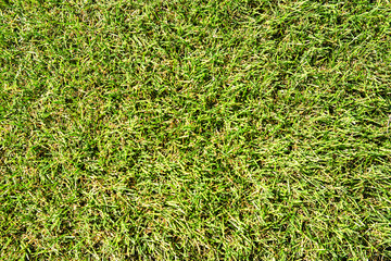 The texture of the artificial lawn on top