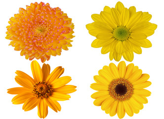 yellow flowers on white isolated background for design