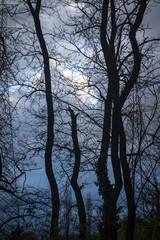 cielo nuvoloso e cupo dopo la tempesta con alberi e tralicci
