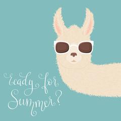 Peering llama in sunglasses