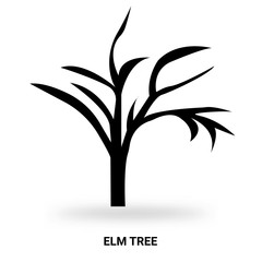 elm tree silhouette isolated on white background