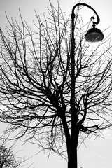Black and white photo with a silhouette of a tree and an old street lamp