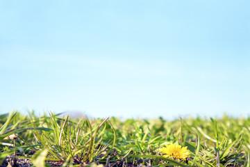 青空を背景に群生する野草