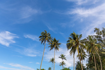 Coconut tree with a background of sky and clouds in the summer.