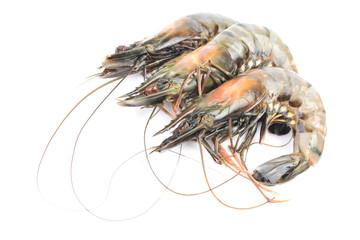 Large tiger shrimp on a white background