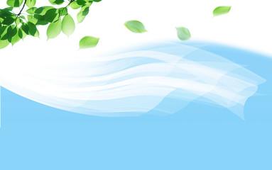 風になびくカーテン、空に舞う若葉