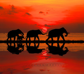 silhouette elephants in the landscape on blurry sunset.