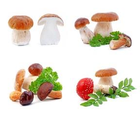Mushrooms - boletus and fly-agaric, set. Isolated on white.