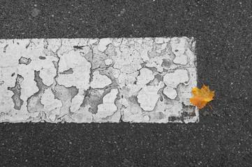 autumn leafs on an old street