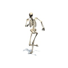 Skeleton is running - isolated on white background