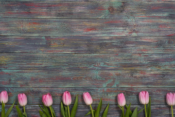Border of fresh pink spring tulips arranged in a row on rustic multicolor wooden boards. With copy space