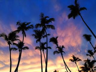 Palm tree silhouette.